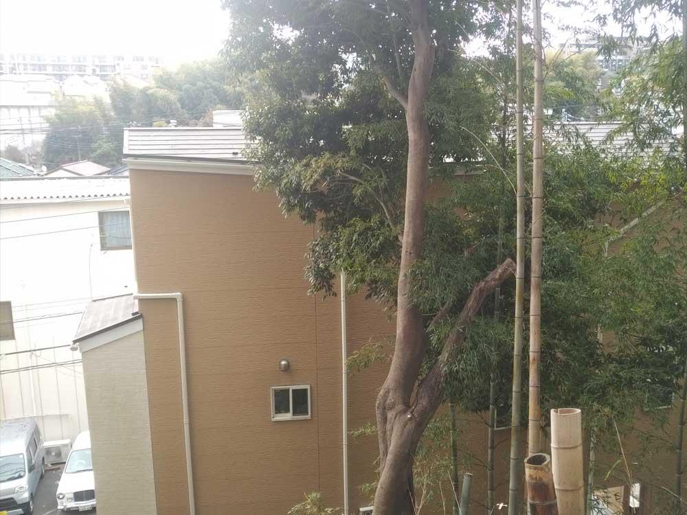 伐採作業前の写真-神奈川県内