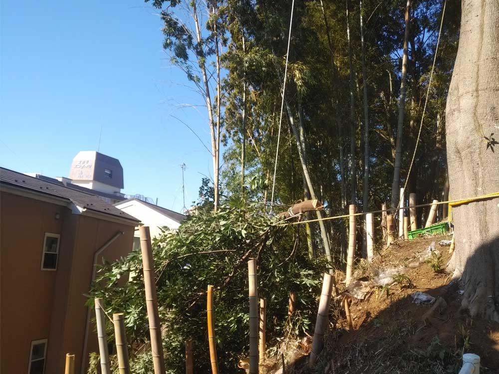 ロープで木の伐採作業-神奈川県内