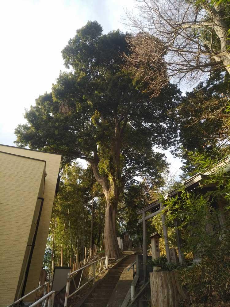 伐採業者 神奈川県 作業前