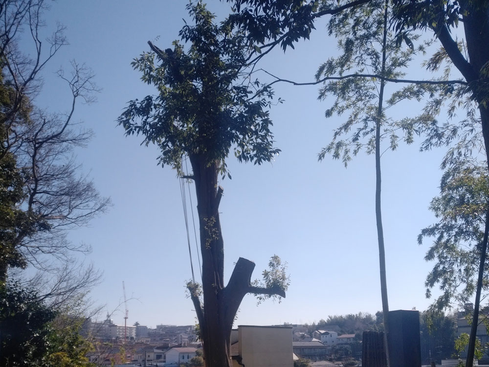 伐採業者 神奈川県 作業中